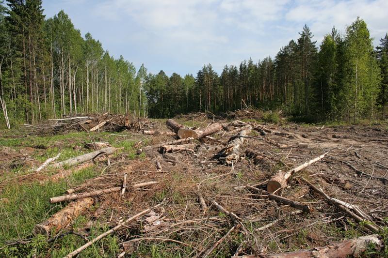 лес1.jpeg